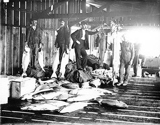 Interior_of_salmon_cannery,_Puget_Sound,_Washington,_ca_1906_(BAR_81).jpeg (1)